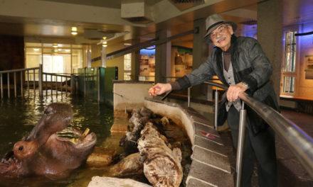 Die Flusspferde haben es dem  Bildhauer Gottfried Kumpf wahrlich angetan