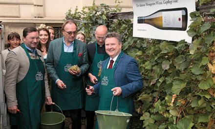 Prominente Weinlese im kleinsten Weingaren Wiens